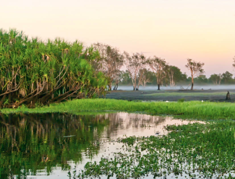 A green marshland at sunset