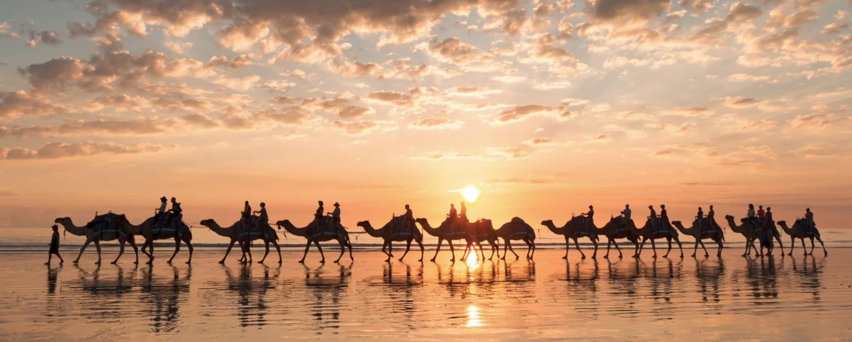 A caravan of camels walk the beach at sunset